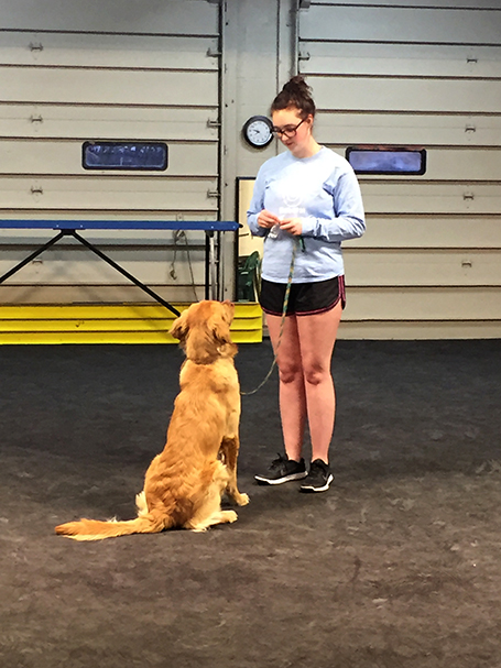 certification classes (canine good citizen & therapy dog class ...