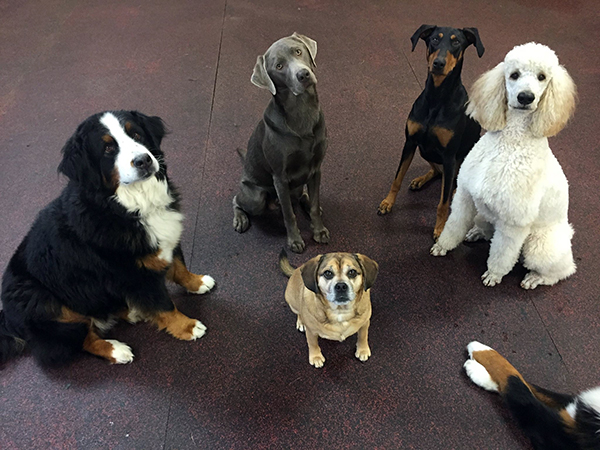 Book your dog for boarding, daycare, training or grooming today.